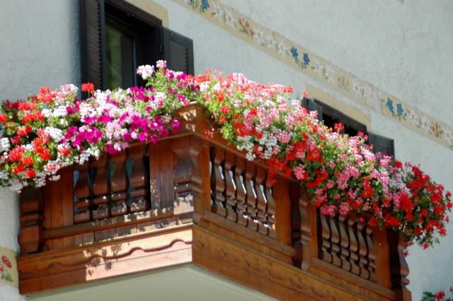 A campodenno balconi finestre e orti ornati di fiori la for Finestra con fiori disegno