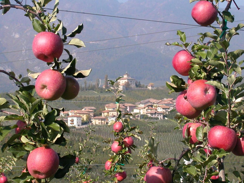La mela fa bene anche al microbiota intestinale