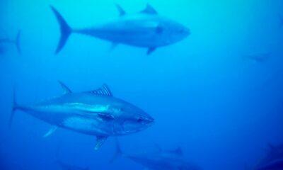Giornata Mondiale del Tonno Airone Seafood